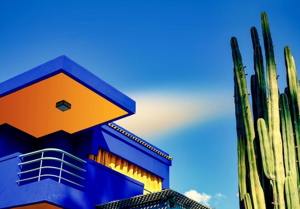 blue concrete building near cactus