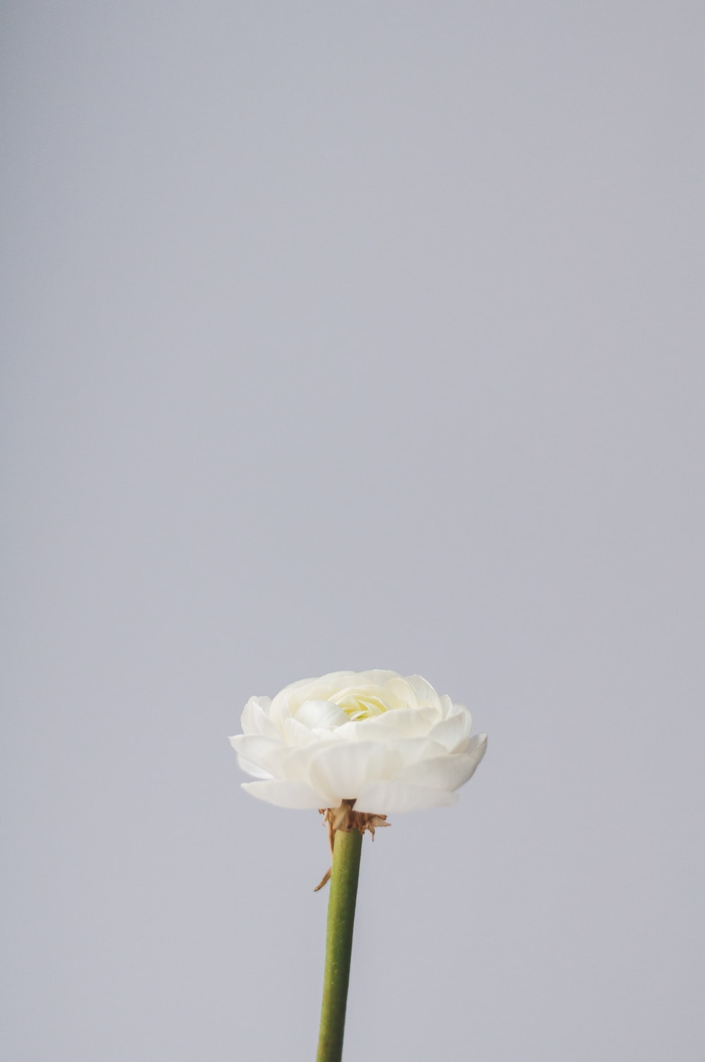 white and green flower with white background