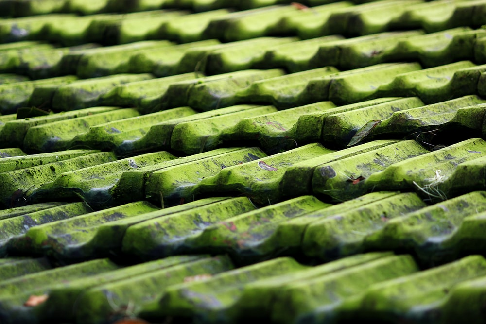 closeup photo of green roof shingles