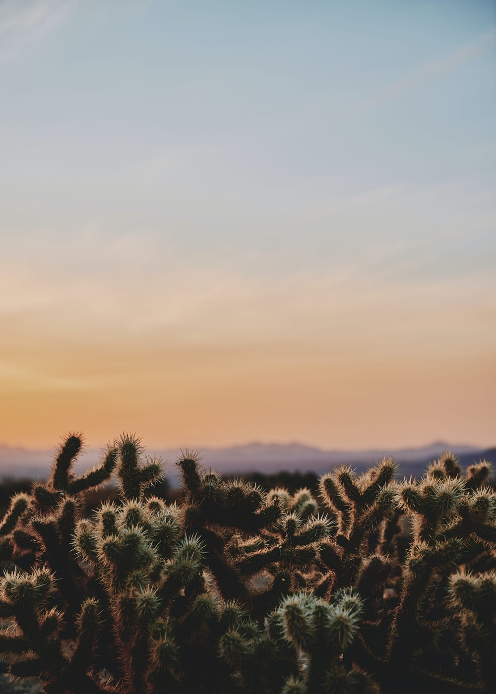 closeup photo of cactus under white and blue sky during daytime photography