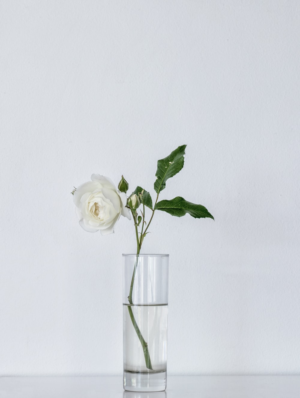 100 white flower pictures download free images on unsplash white flower pictures mightylinksfo