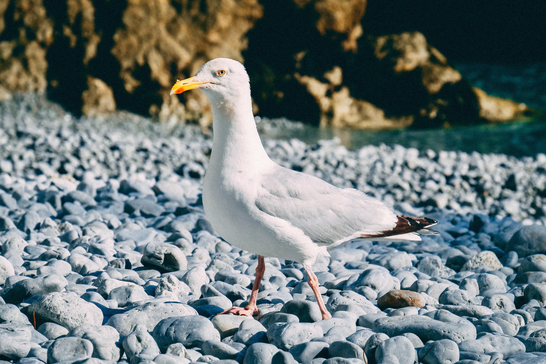 white seagull standing on gray rocks