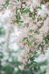Bloom  happy stories