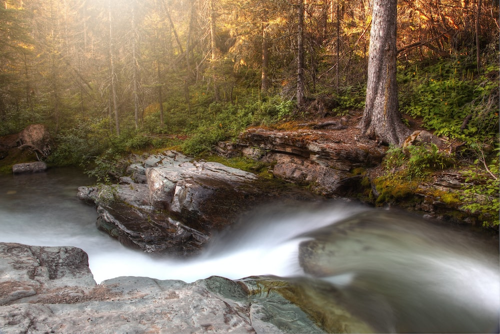 Time Lapse Photography Of River Flowing In The Forest