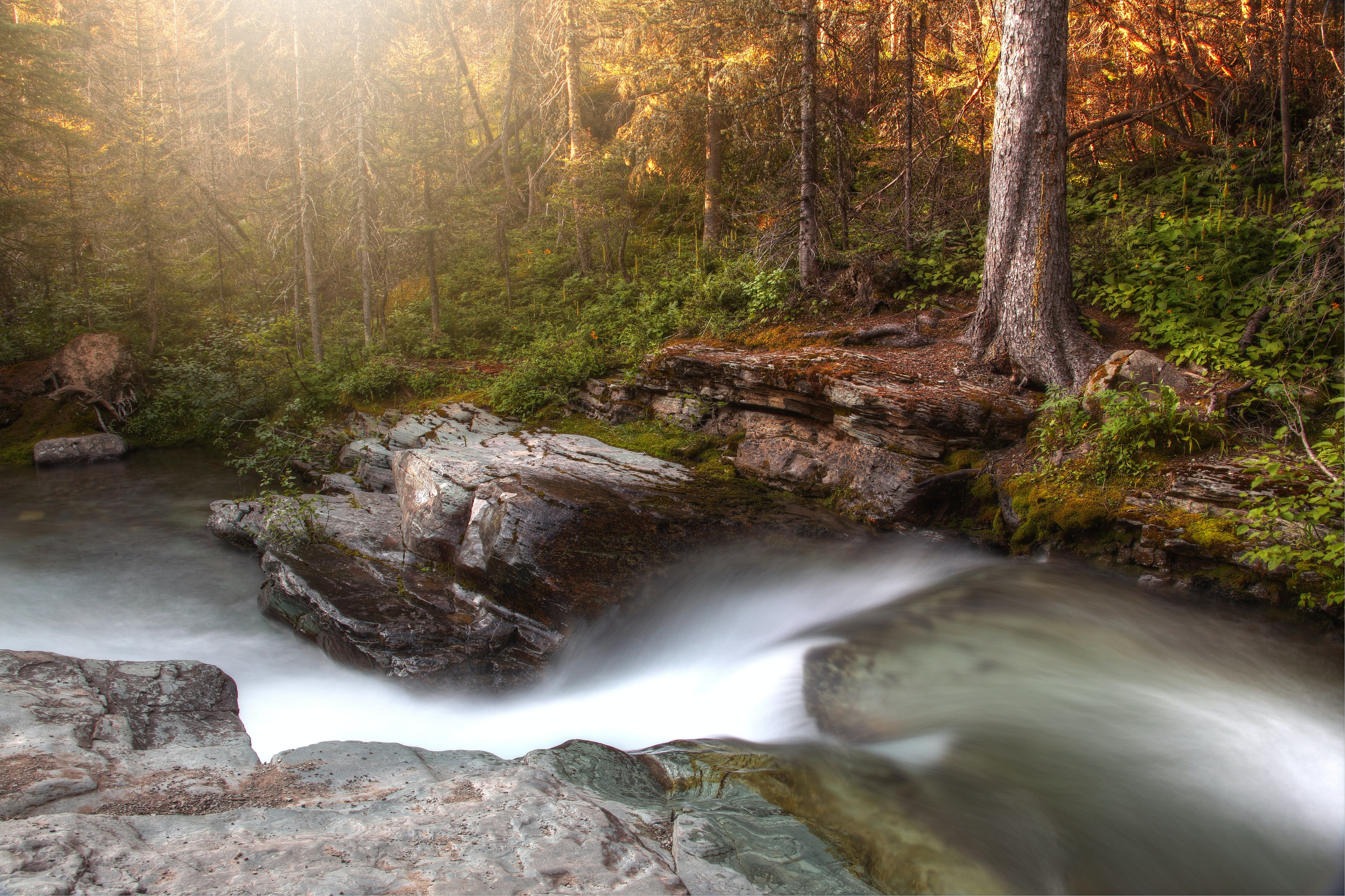time-lapse photography of river flowing in the forest