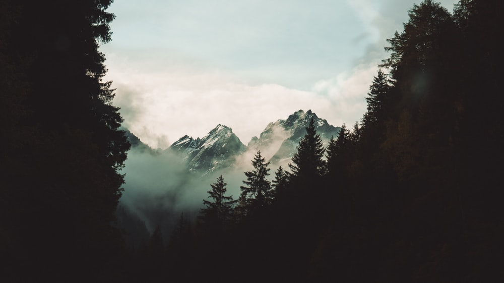 silhouette photo of trees in front of snowy mountain