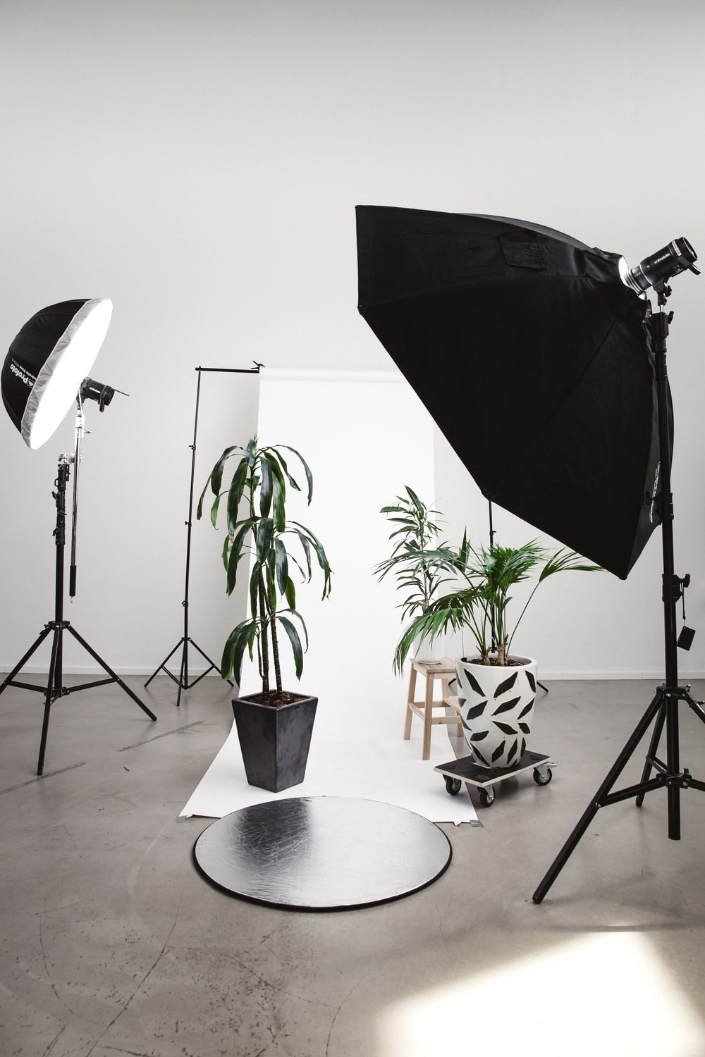 three green linear leafed plants beside softbox