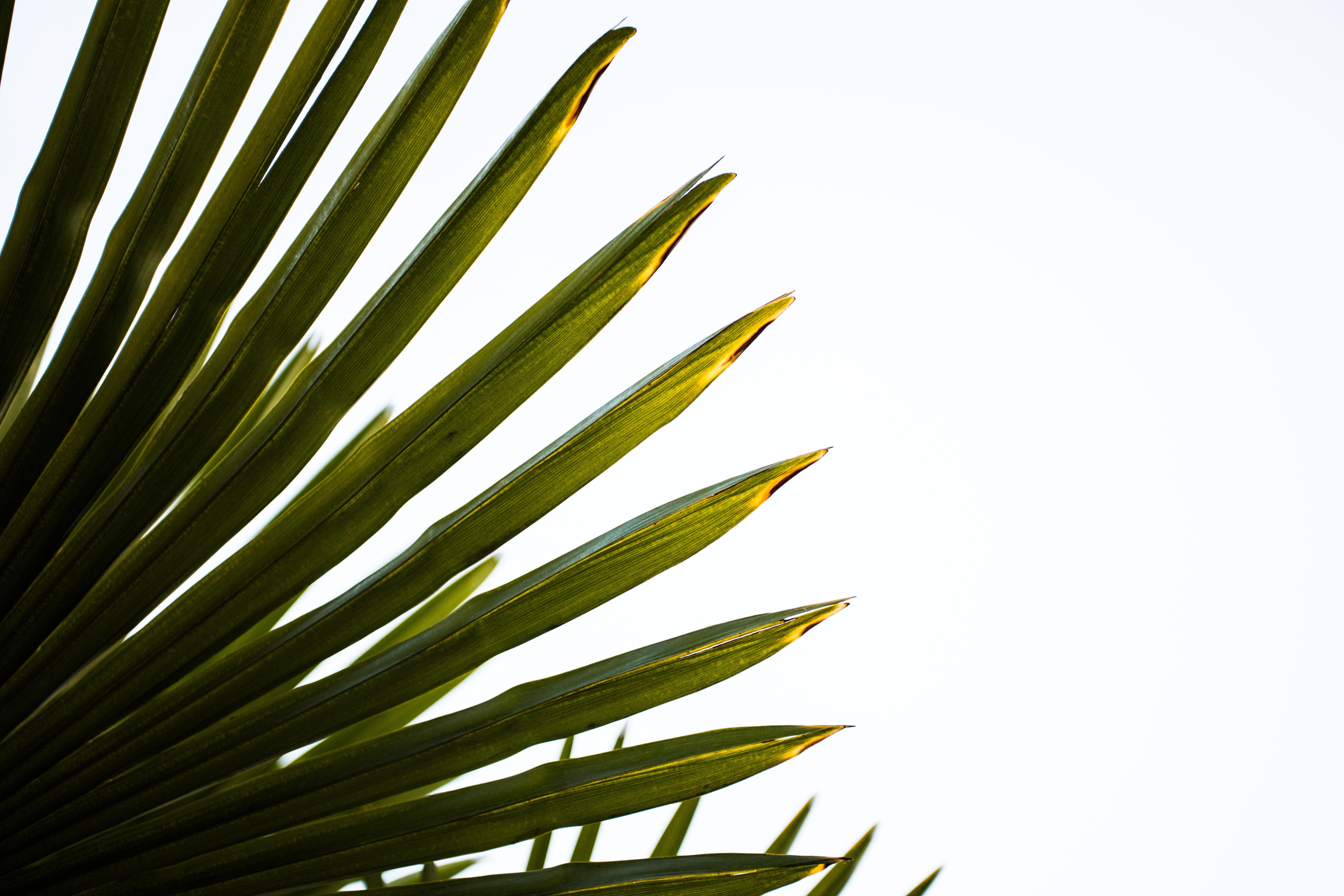 closeup photo of palm leaf