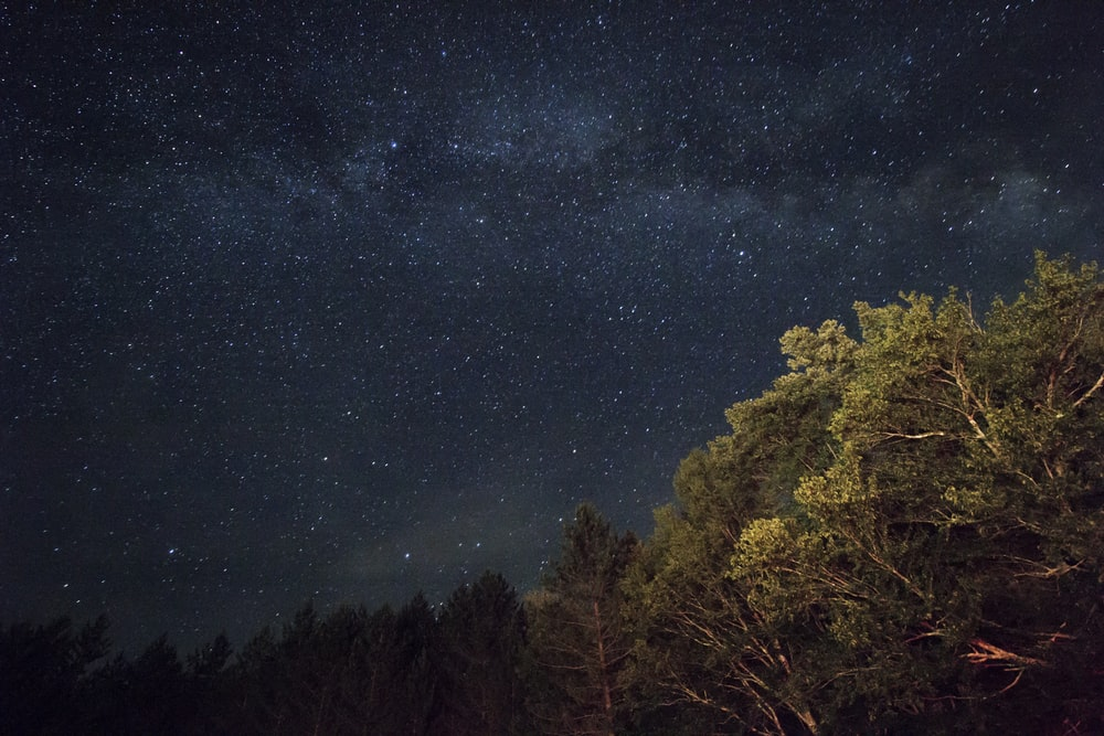 green leaf trees under stars at night time
