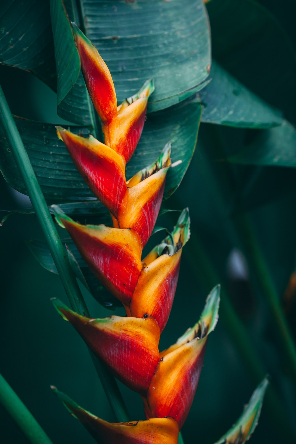 Tropical Flower Pictures