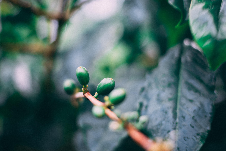 green leaf budded during daytime