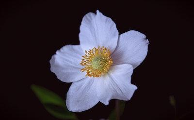 white 6-petaled flowers