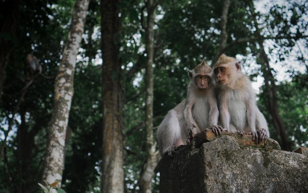 three primate on top of stone