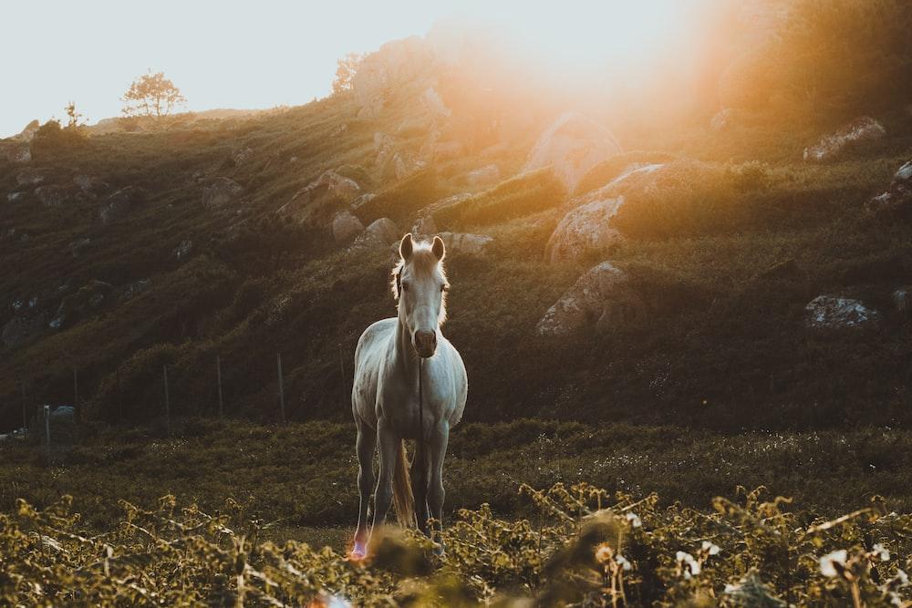 photo of galloping horse towards green grass