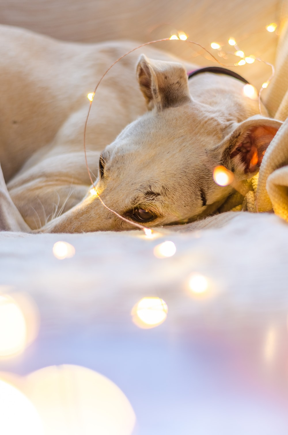 white dog lying on LED strip lights