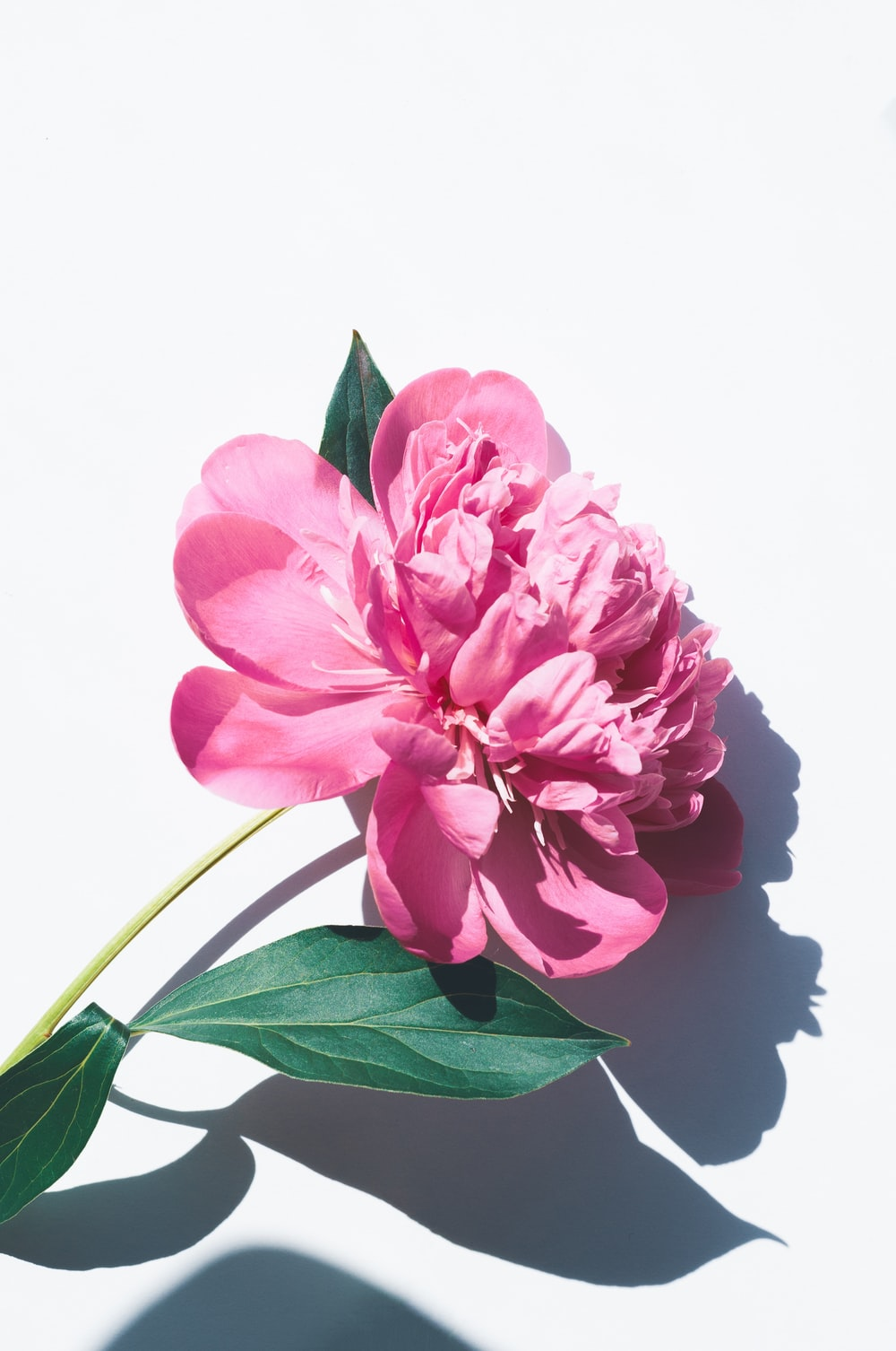 photo of pink petaled flowers