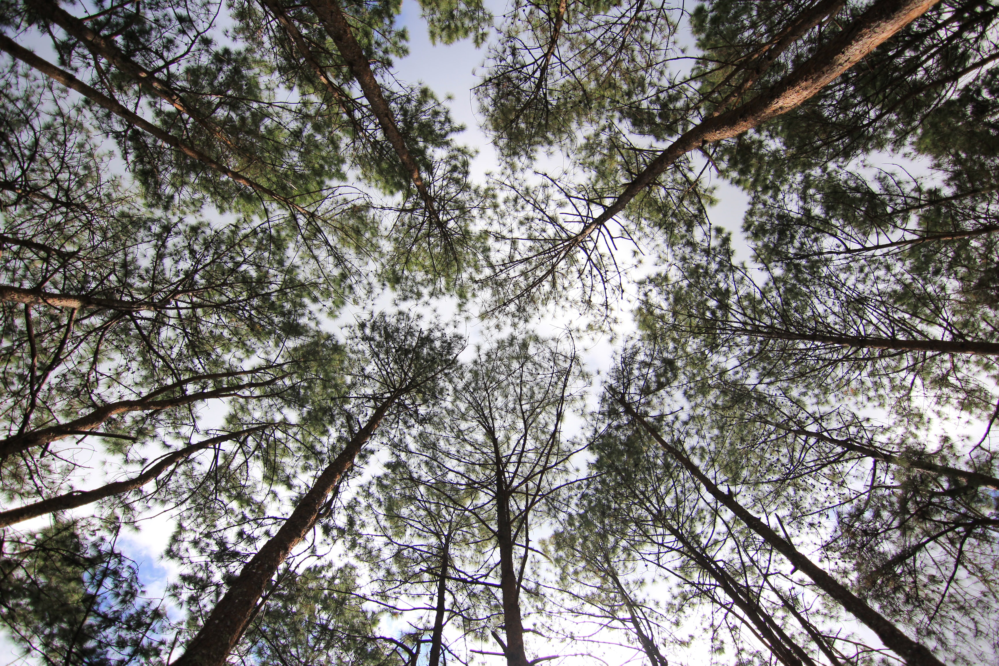 worm's eye view photo of green leafed trees