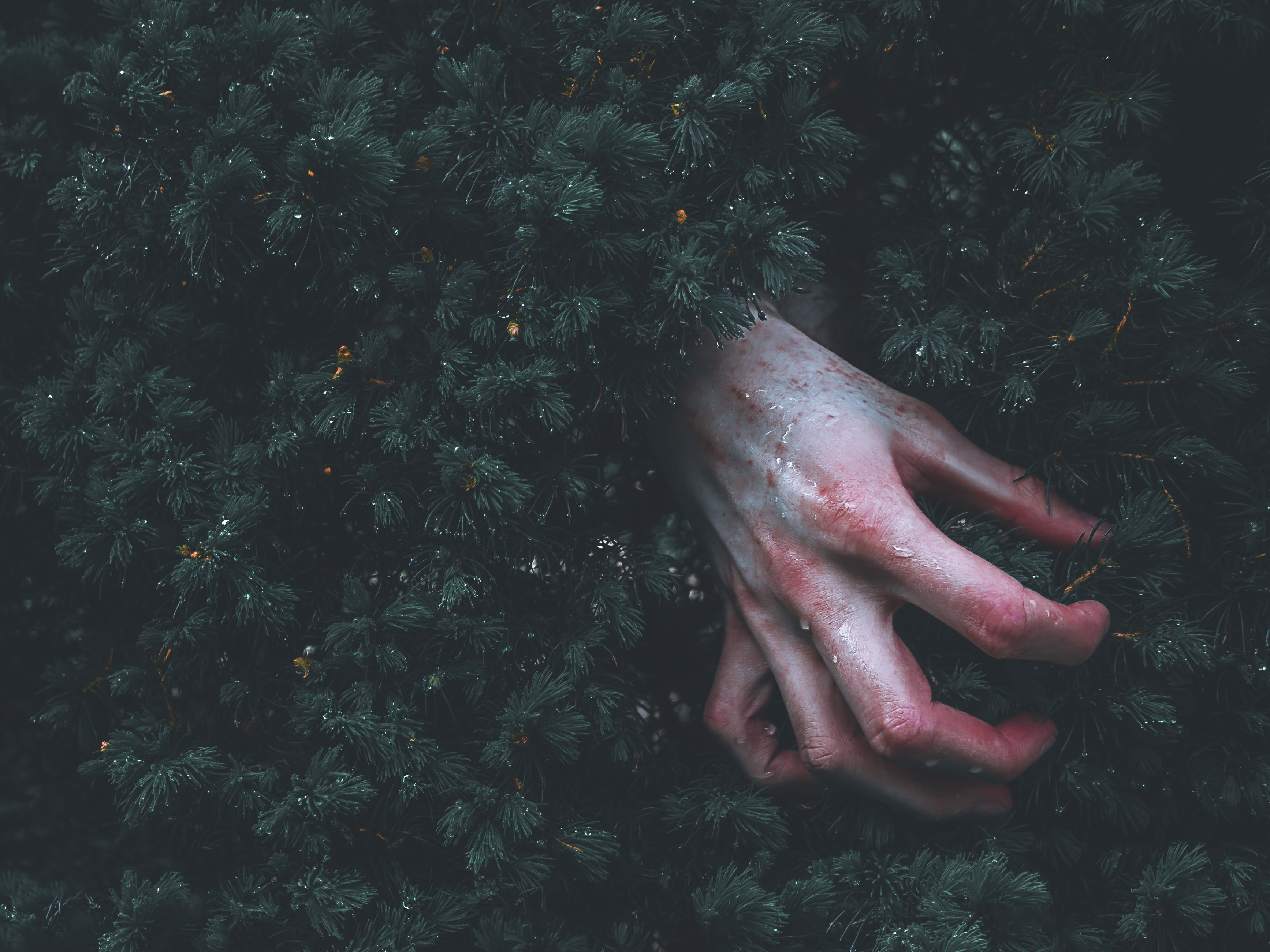 human hand on green grass