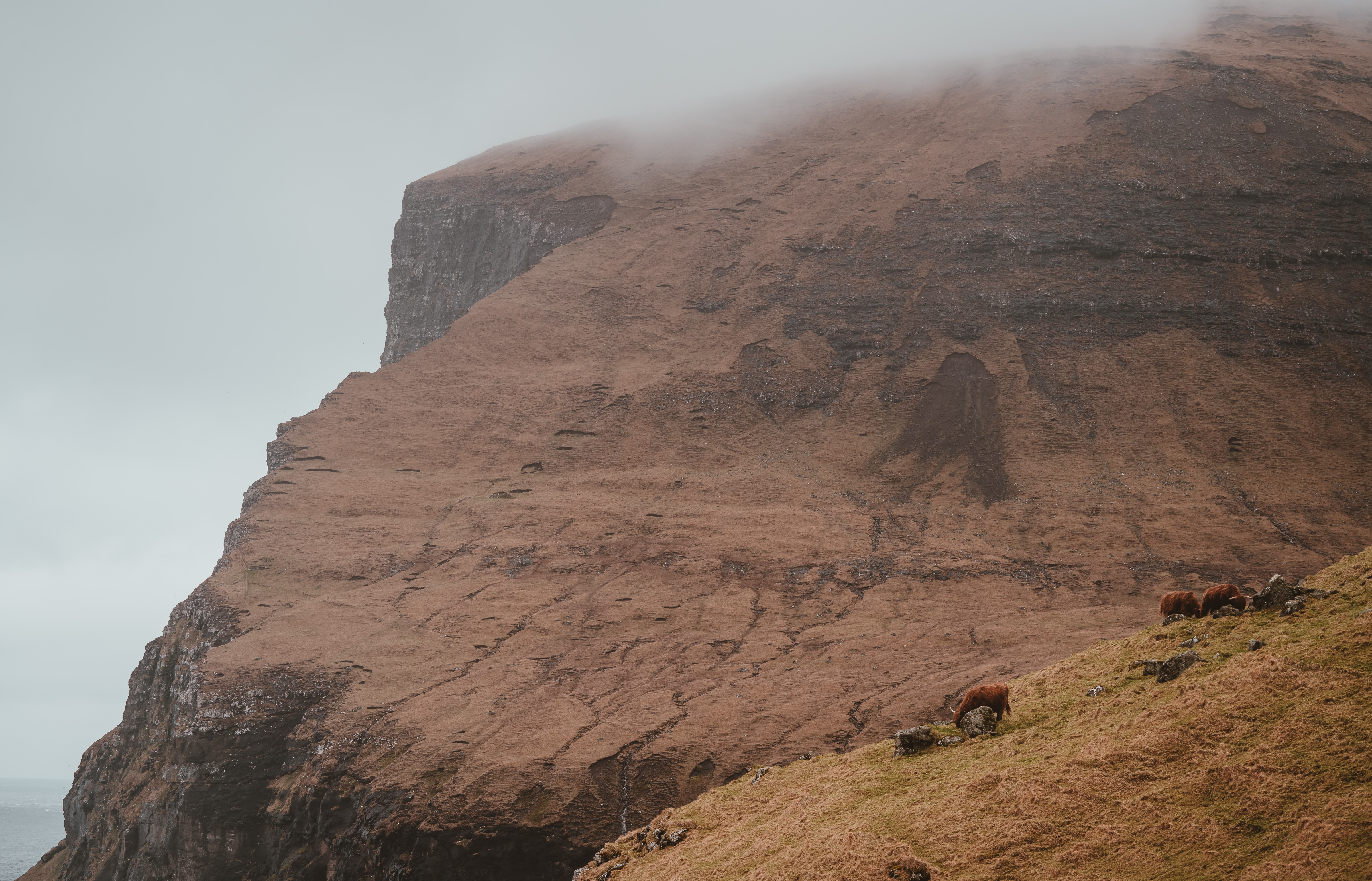 three brown cattle on green field during foggy day