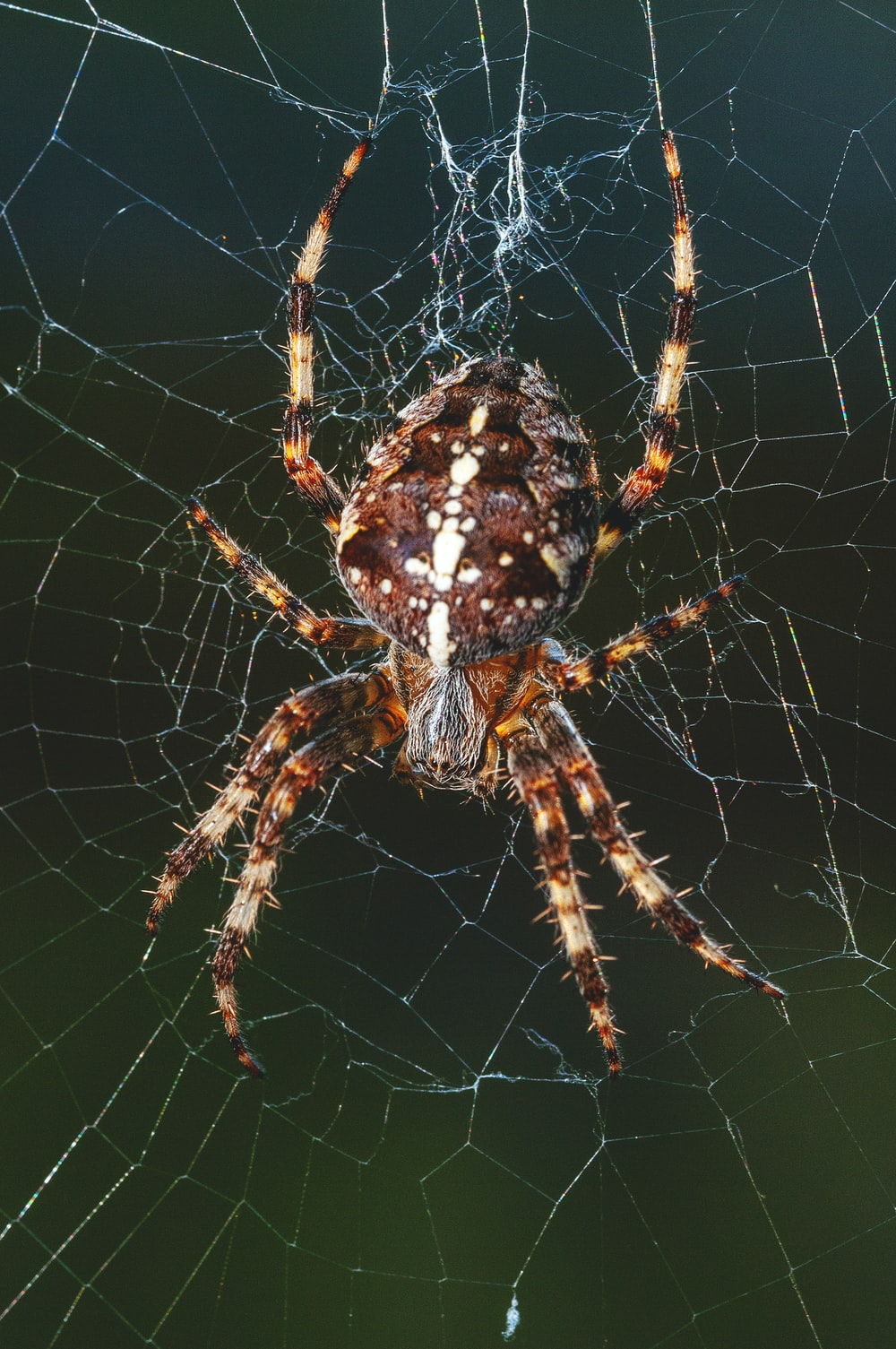 closeup photography of brown spider on spider web