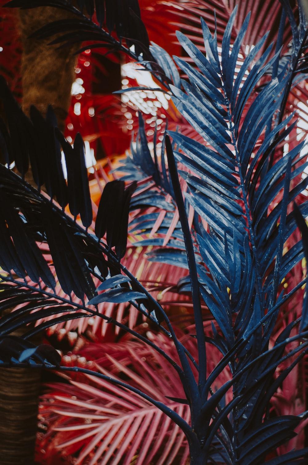 blue leafed plant during daytime