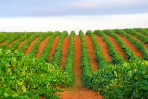 4650. Bor,szőlő, borászatok