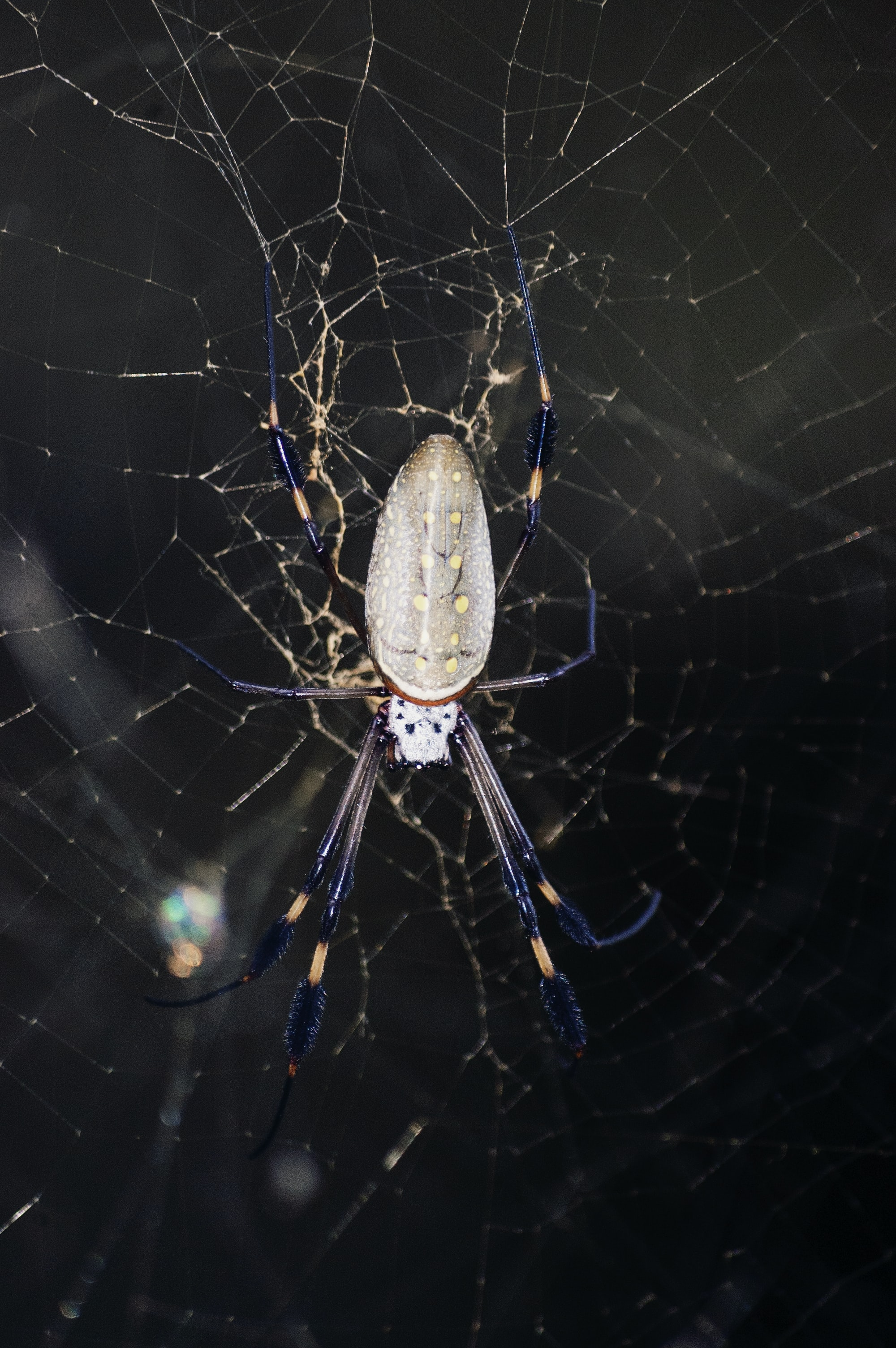 gray spider on cobweb