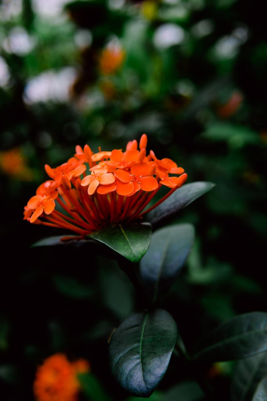 close up photography of orange petaled flowers