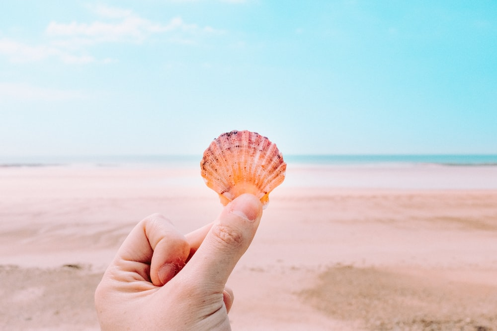 person holding shell facing sea
