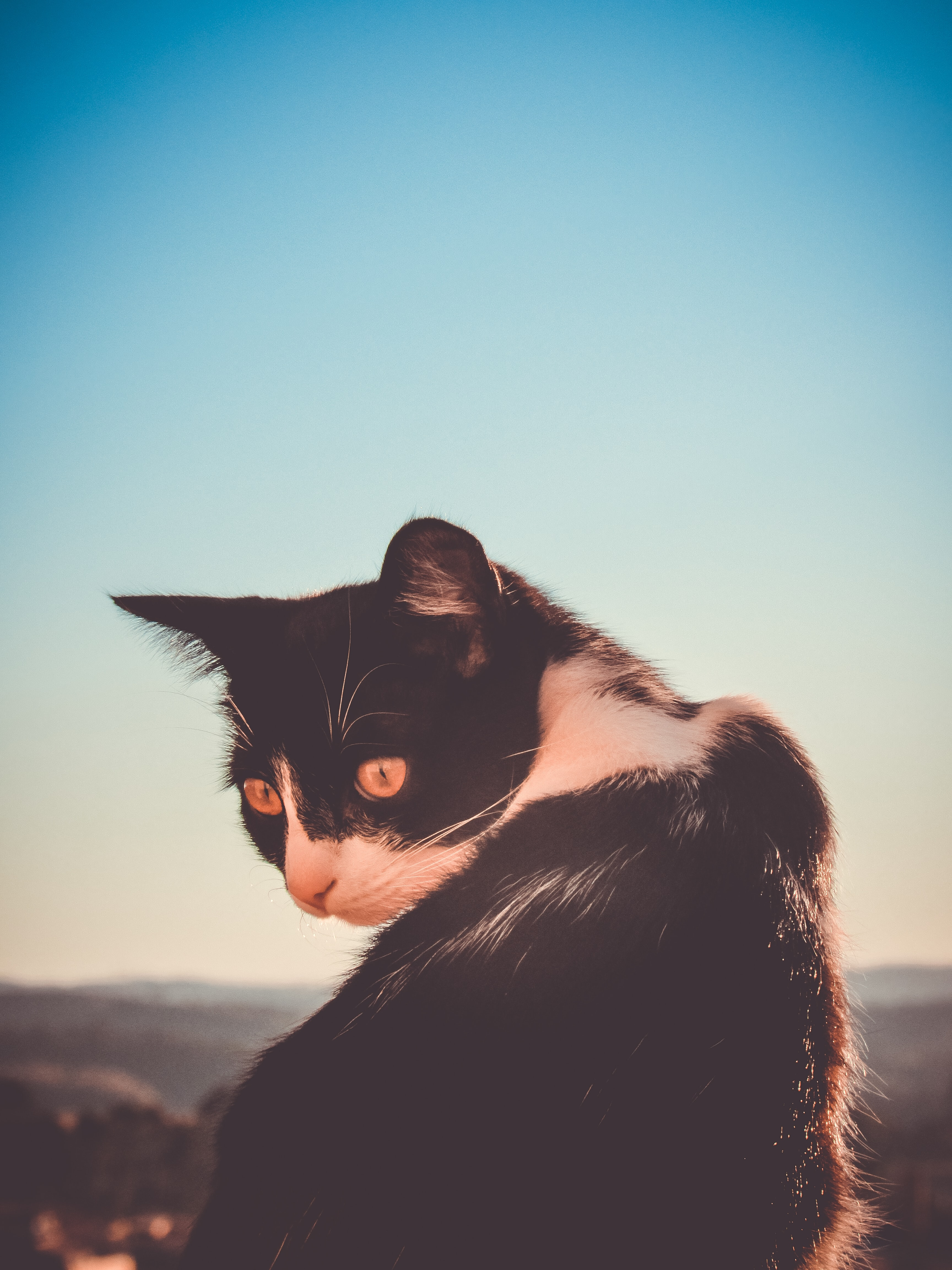 black and white cat in selective focus photograhy