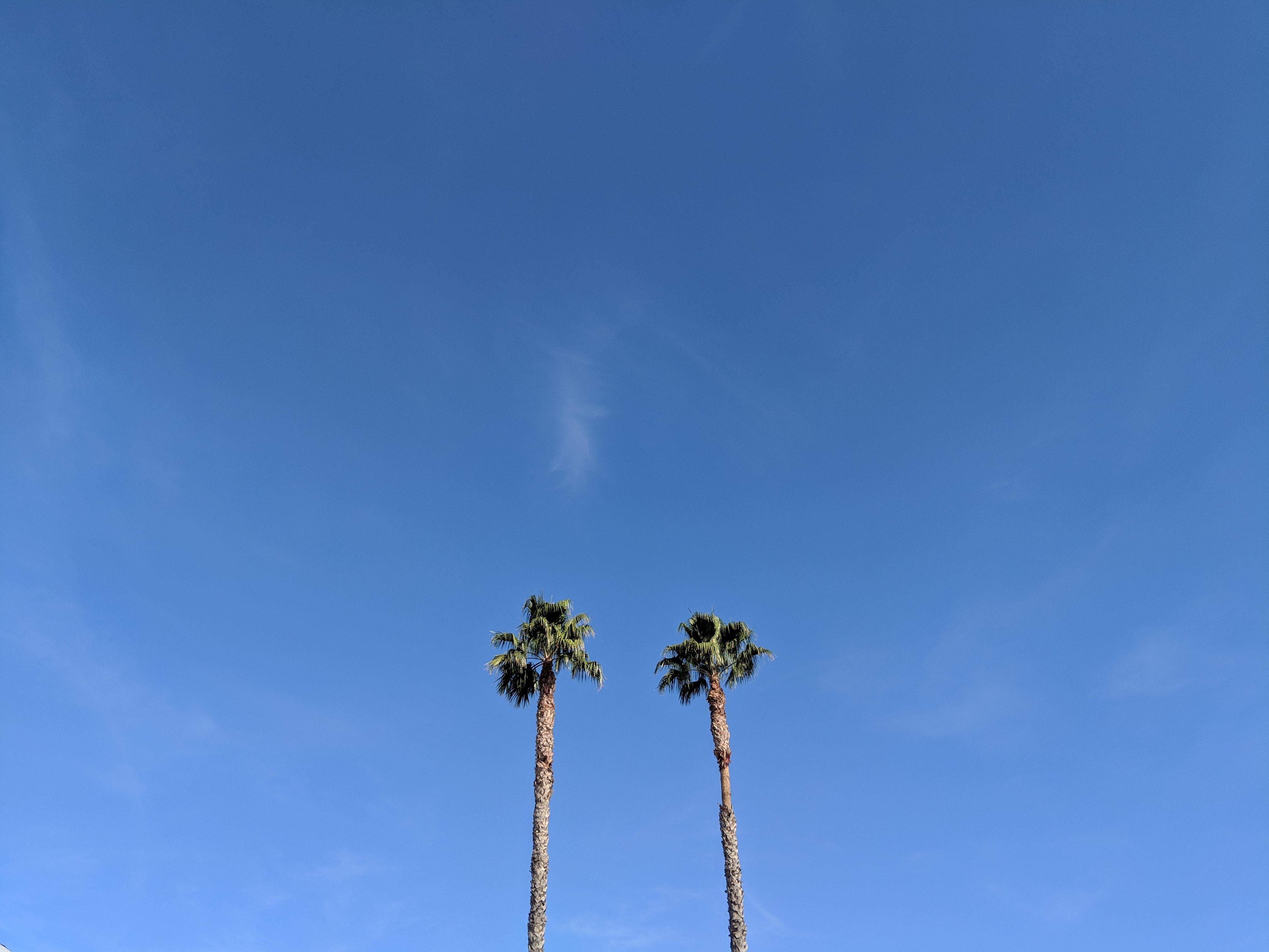 two green palm trees during daytime