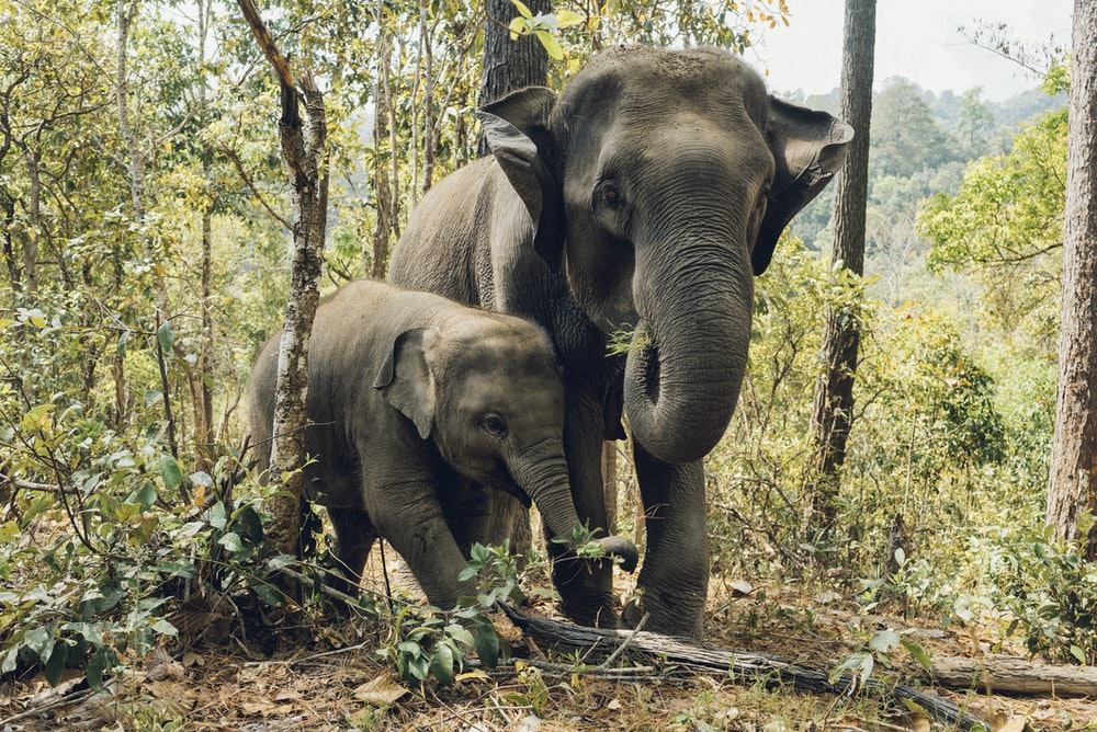 two elephants near trees
