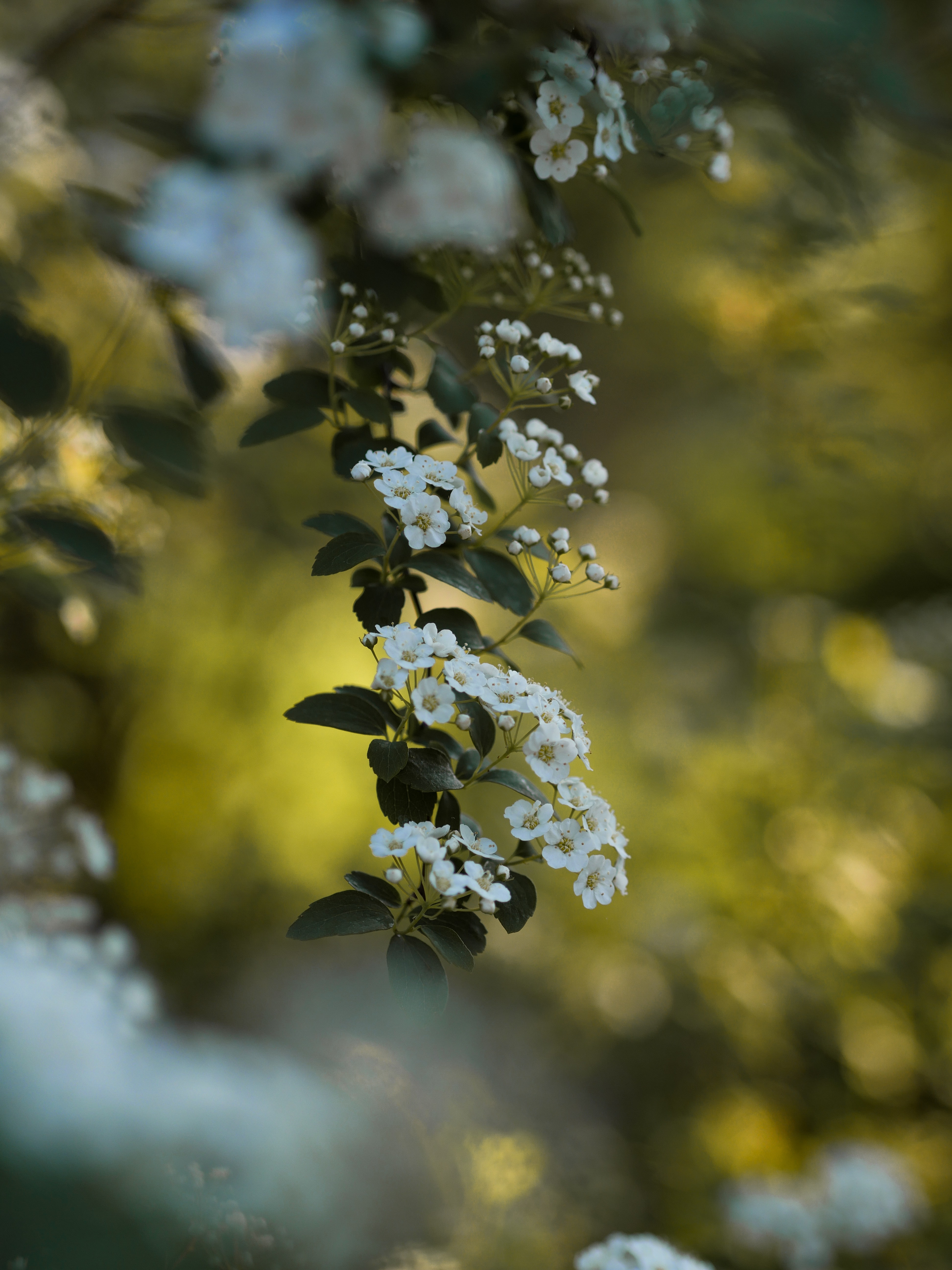 depth of field photography of white petaled flowers