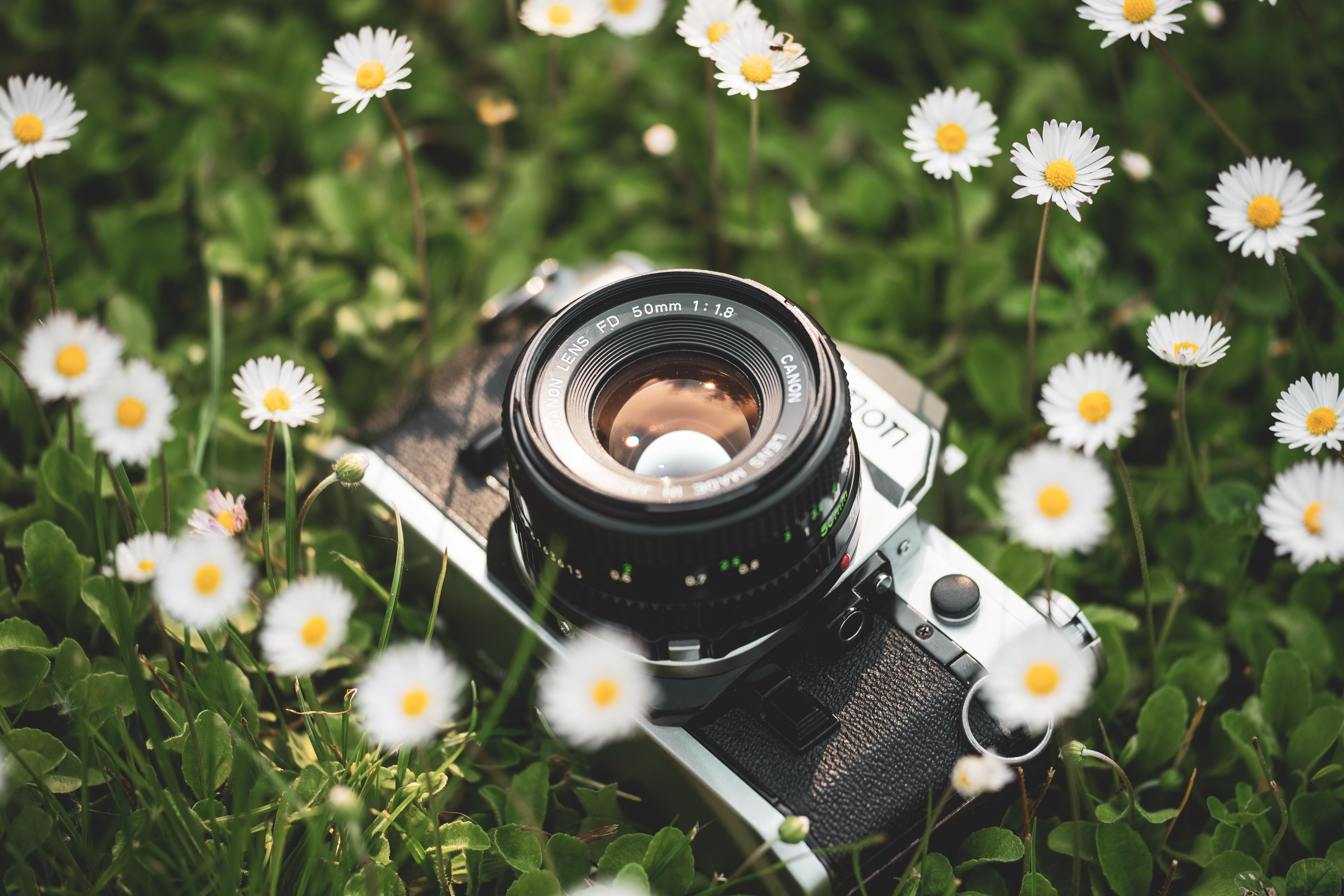 gray MILC camera on daisy flower field