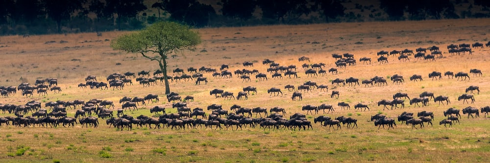 bunch of antelopes