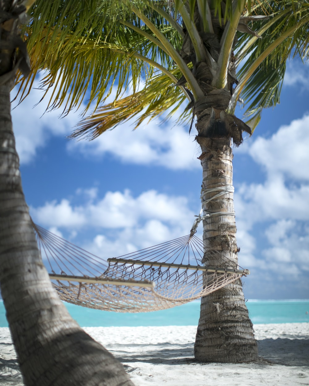 two coconut trees and beige hammock