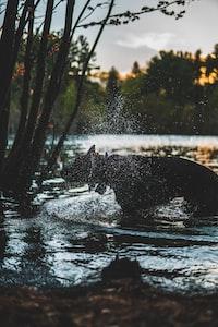 black animal in body of water