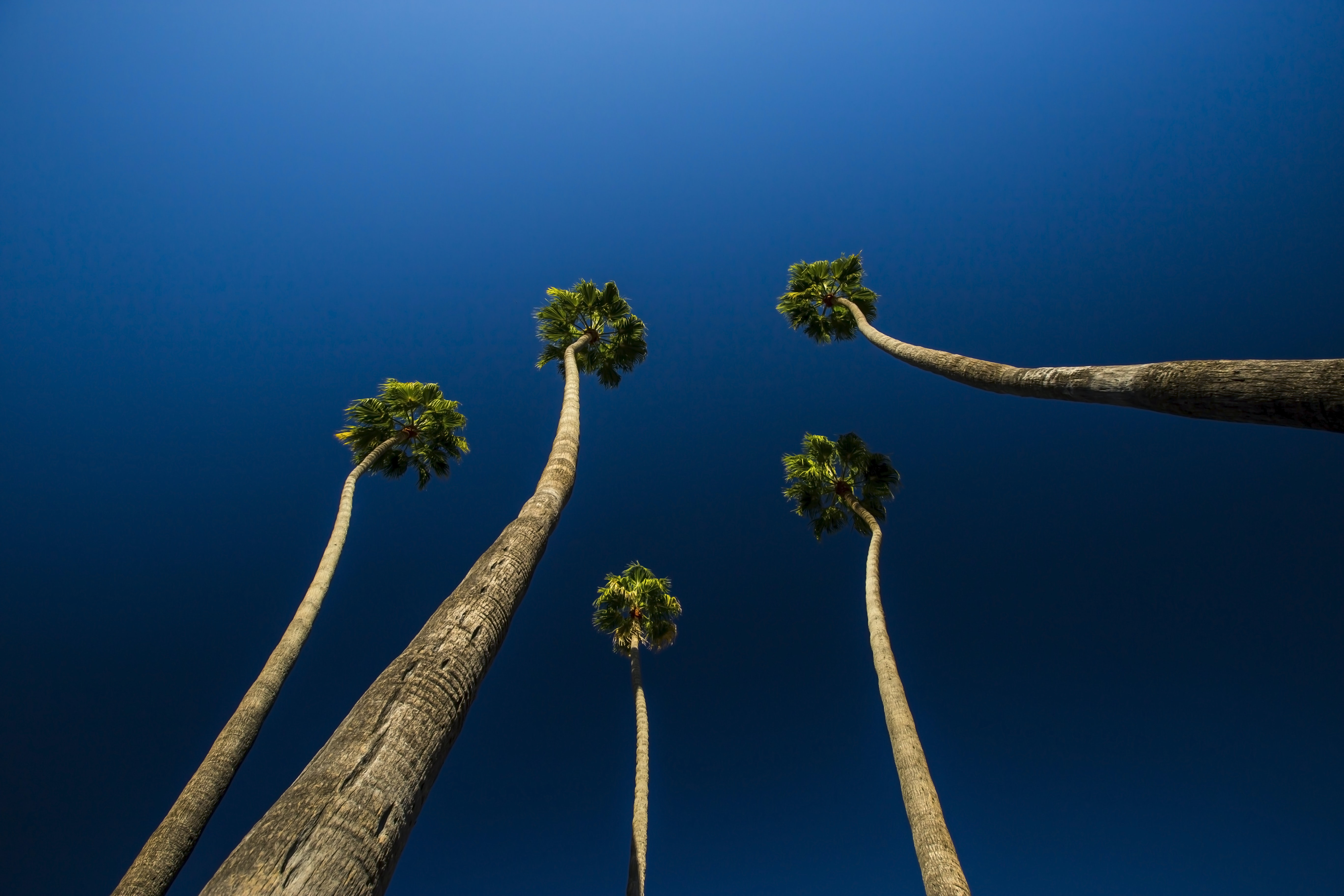 worm's-eye view photography of trees