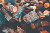 pile of tree logs
