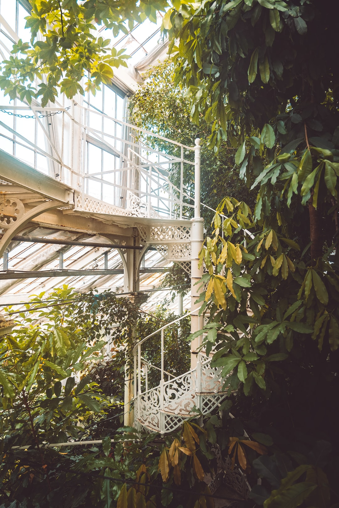 An old, hidden spiral staircase among vines, palms and exotic plants. This exotic getaway can be found in no other place than within the Palm House of the Botanical Garden in Copenhagen.