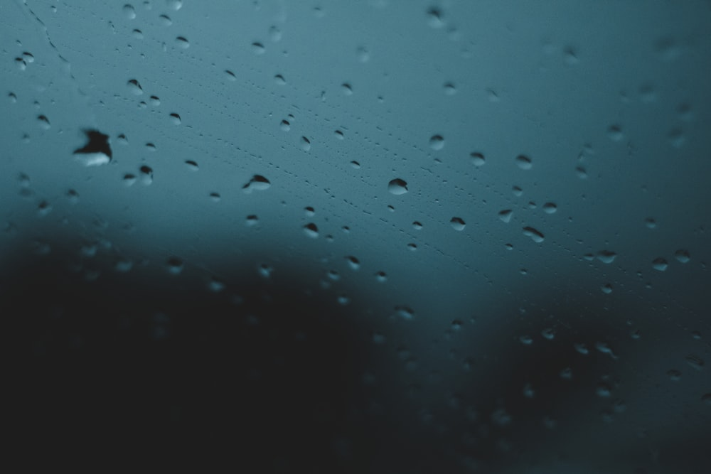 closeup photo of water dew