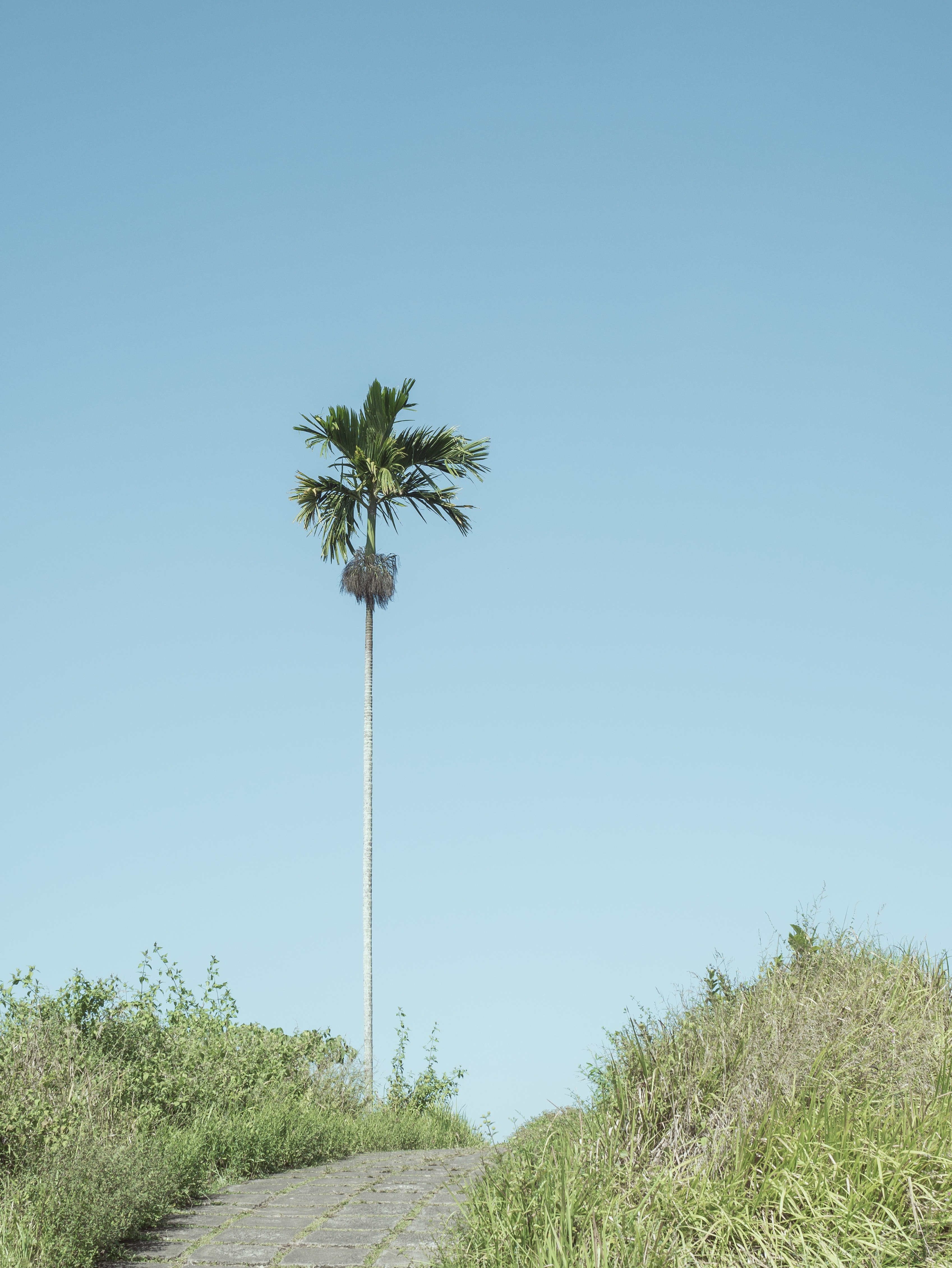 green coconut tree surround by grass under blue sky during daytime