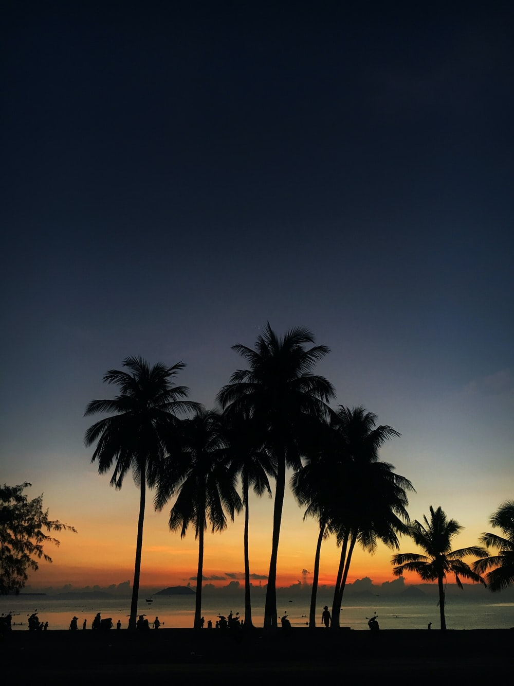 silhouette photo of coconut trees during golden hour