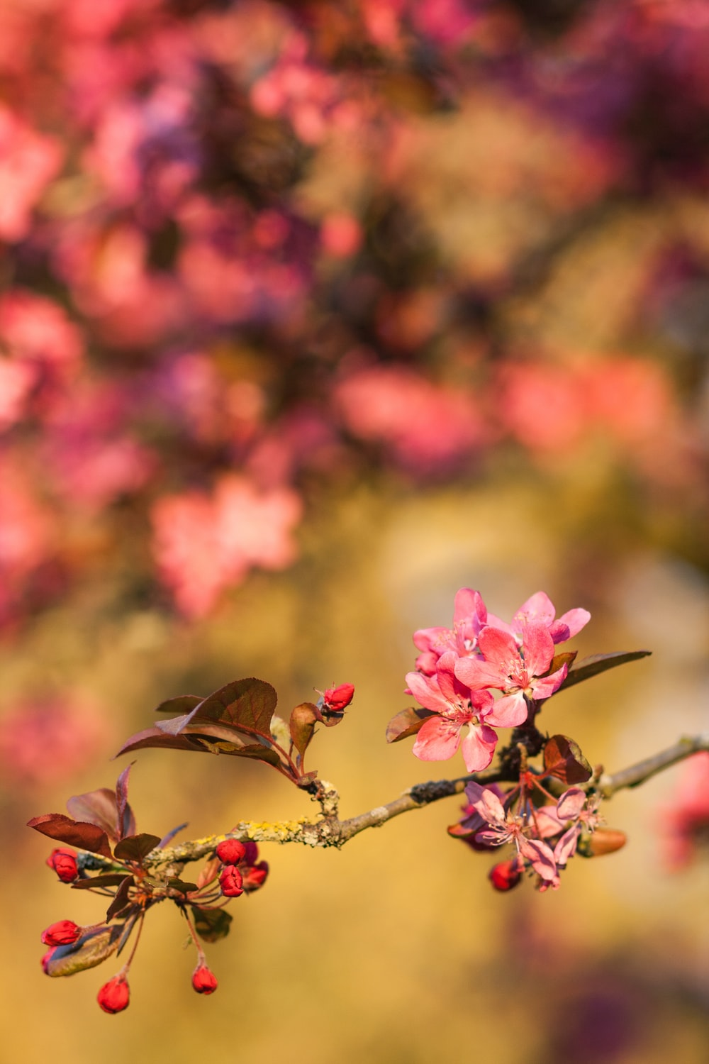 shallow focus photo of pink flowers