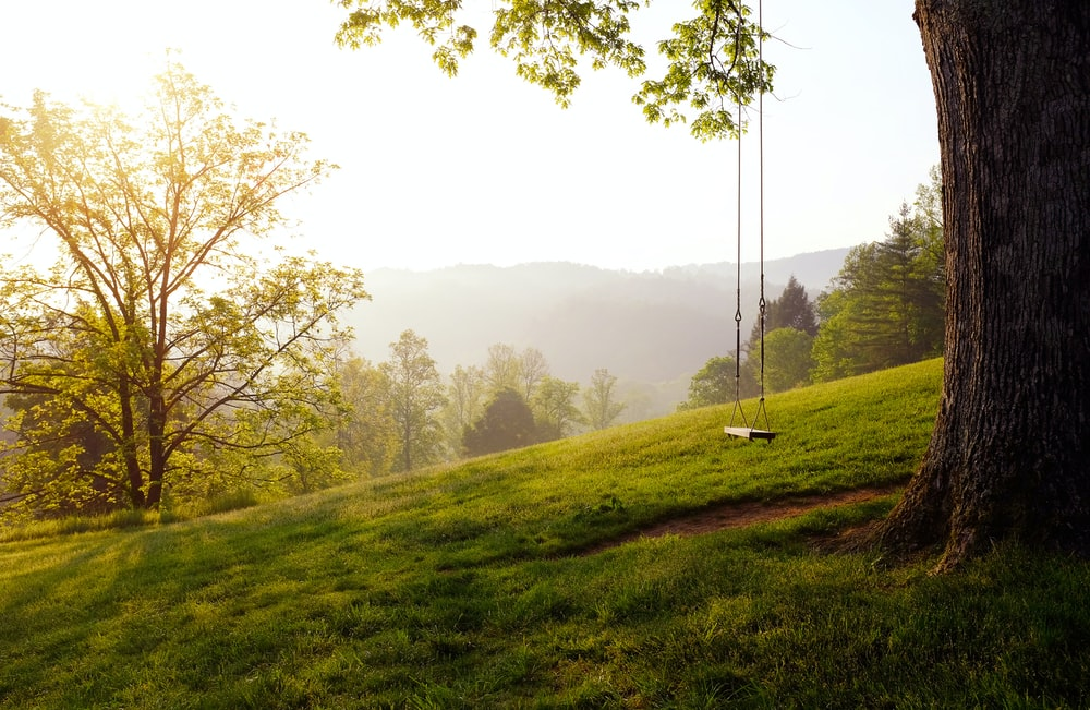 tree swing on hill during daytime