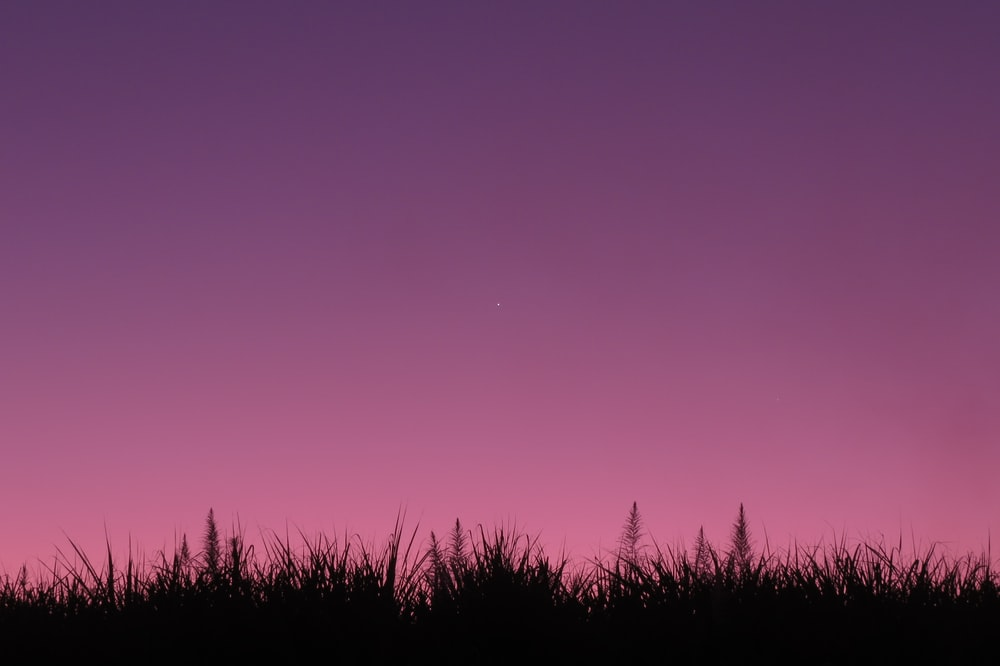 silhouette of grass under purple sky