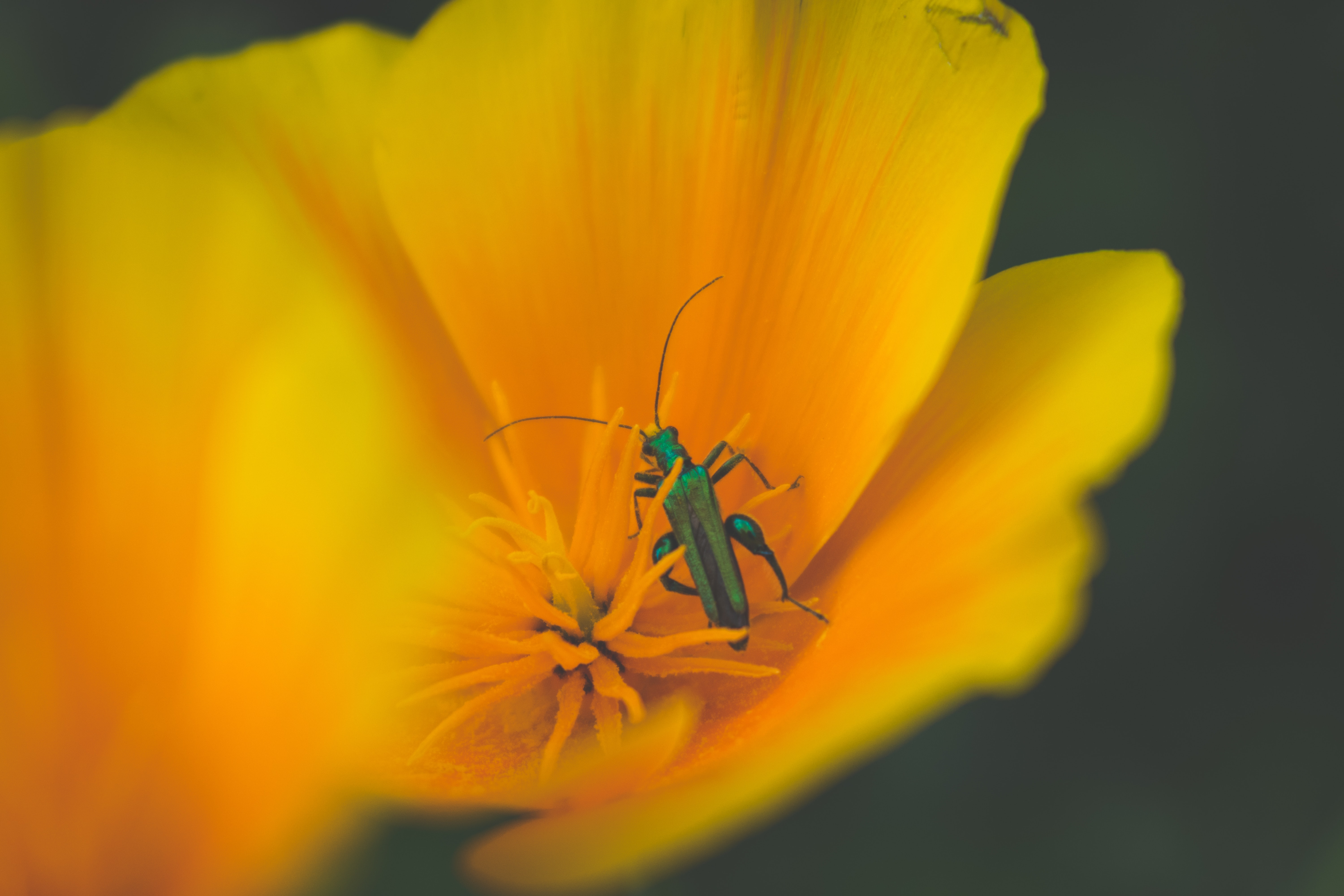 green insect sits on yellow flower