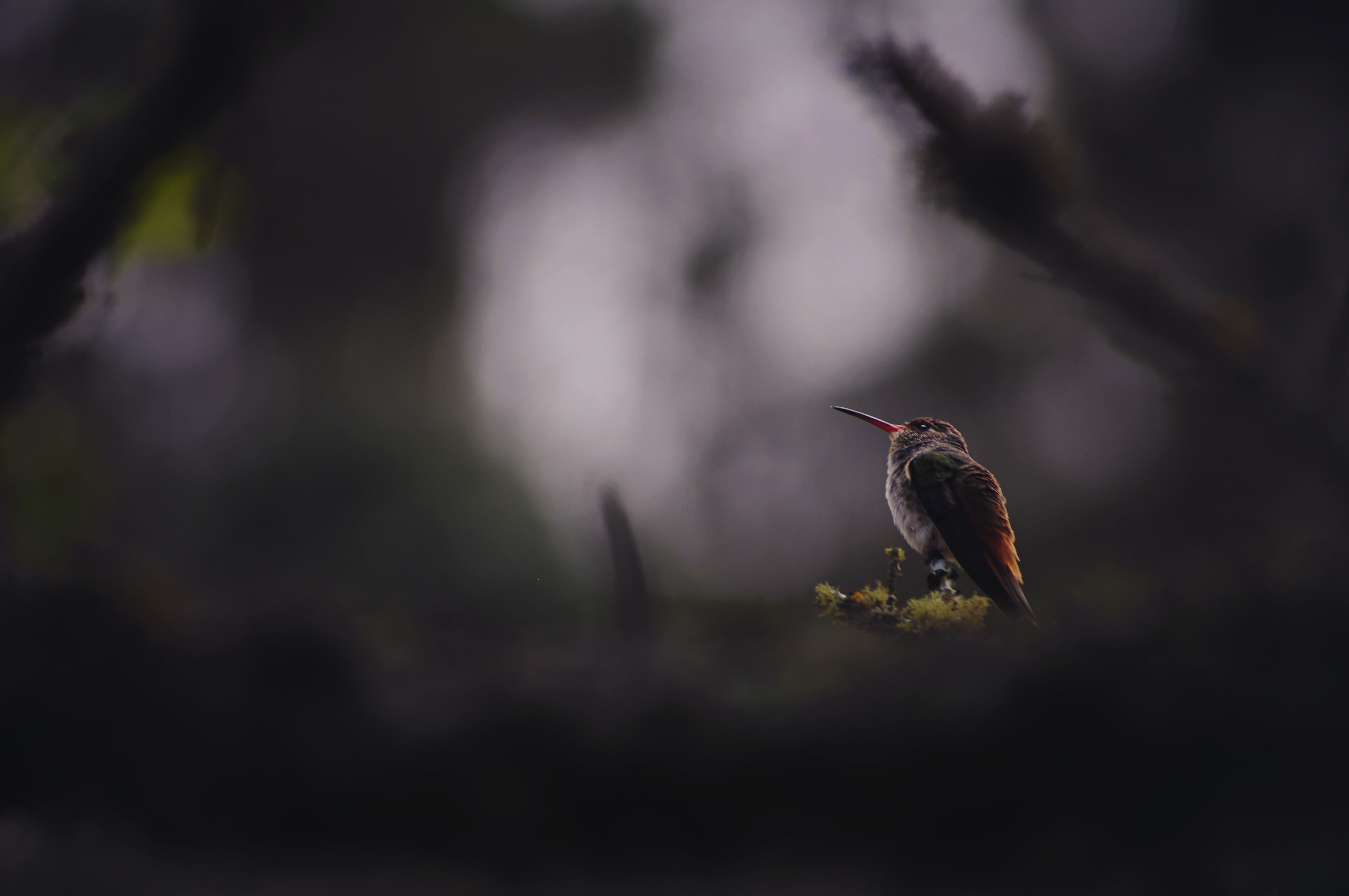 shallow focus photography of brown and black bird