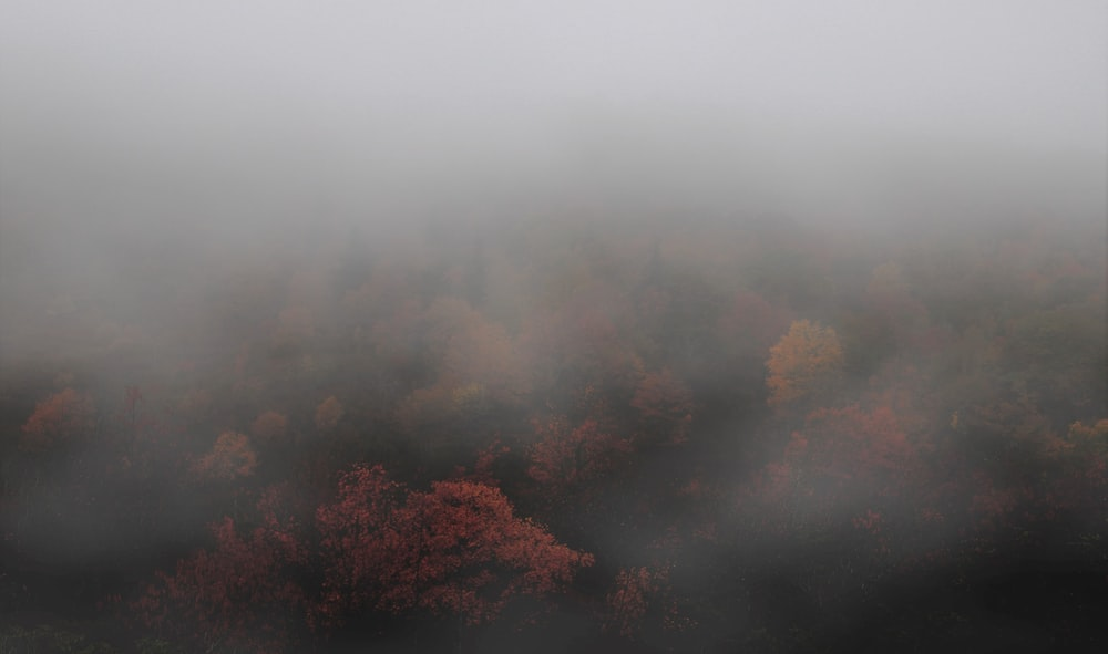 aerial photography of foggy forest during daytime