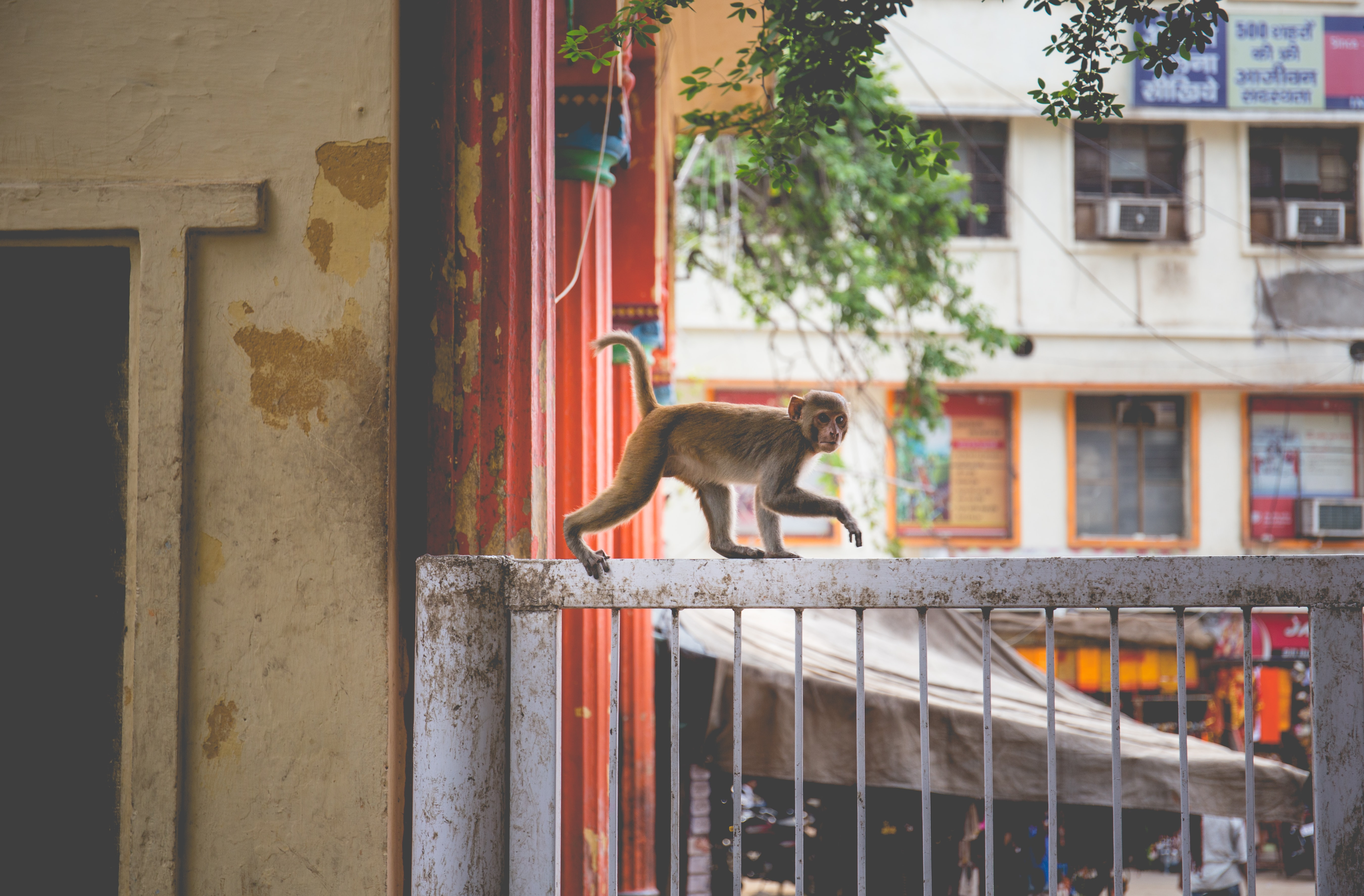 primate on white metal grille during daytime